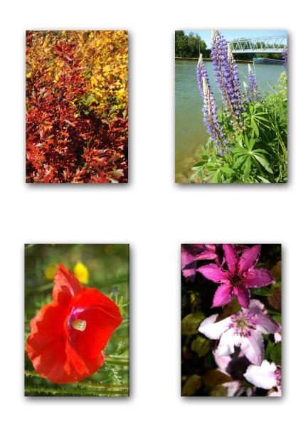 Foto-Florales-I-1-4