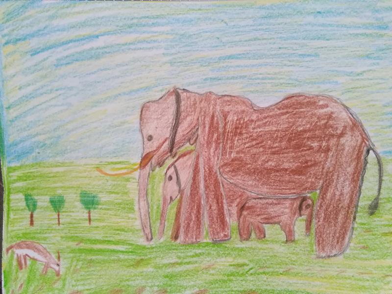 Elefanten, Landschaft.