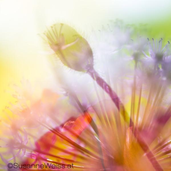 Flair de Fleurs N80_4098